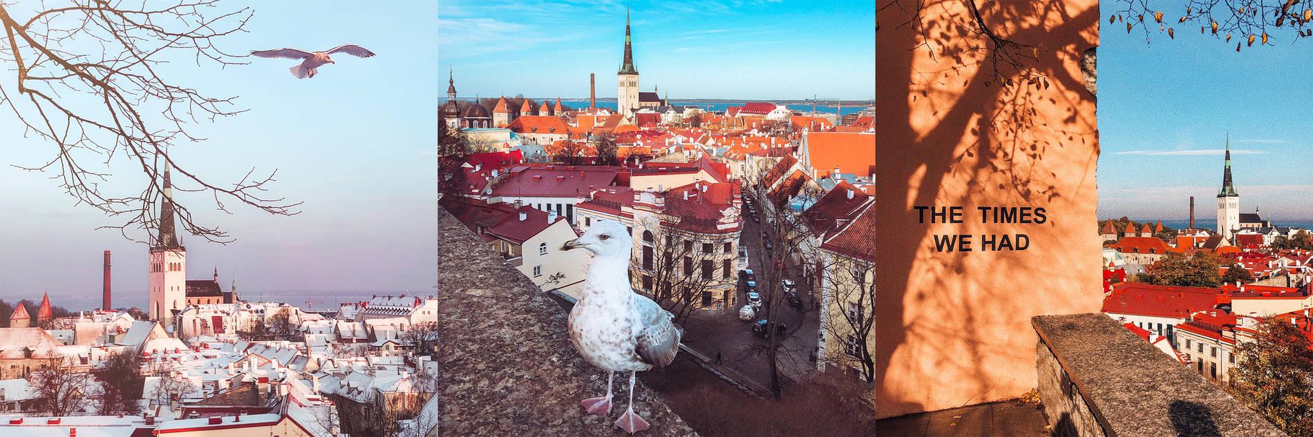 Kohtuotsan näköalatasanne, Tallinna Kuva:
