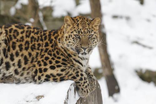 Tallinnan eläintarha – talvinen elämys