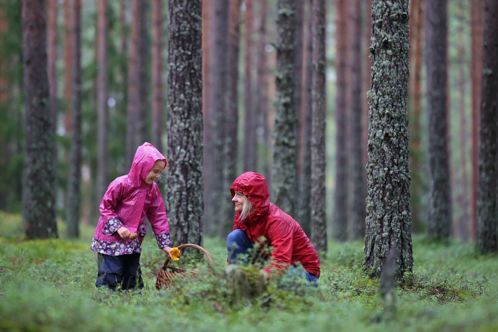 Mushroom picking in the surroundings of Tallinn, Estonia. Photo by: Remo Savisaar